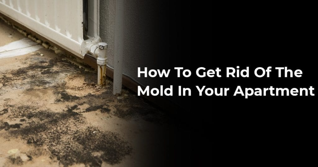 How To Get Rid Of The Mold In Your Apartment