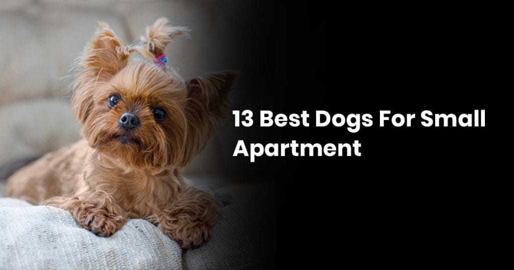 13 Best Dogs For Small Apartment