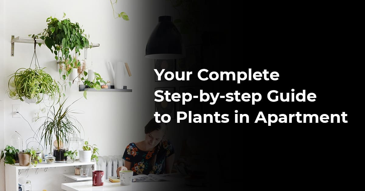 Your Complete Step-By-Step Guide To Plants In Apartment