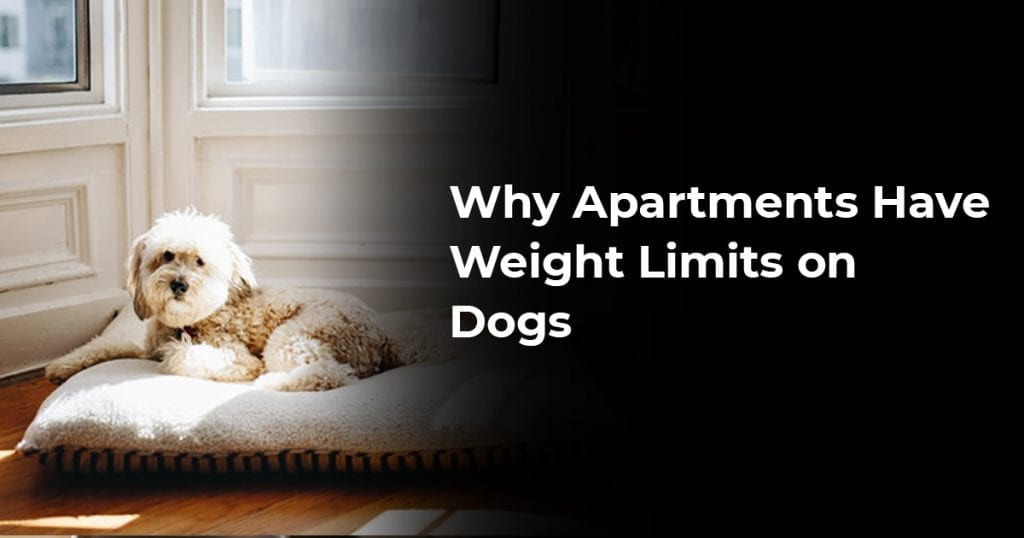 Why Apartments Have Weight Limits On Dogs