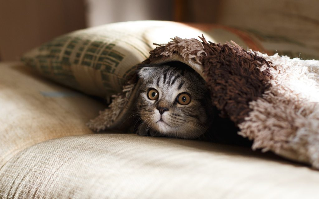 Cat in Beds