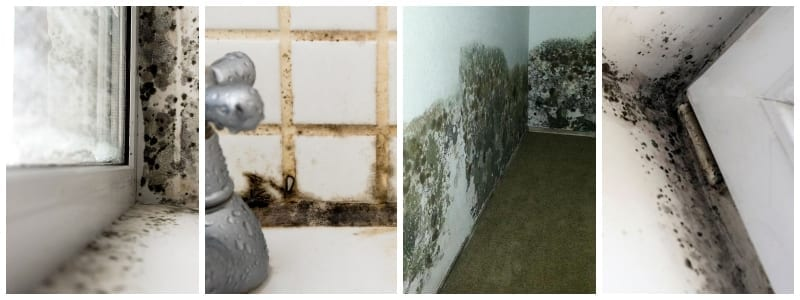 Different Types of Mold in your apartment