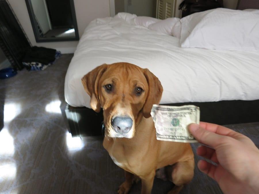 Dog Price Apartment