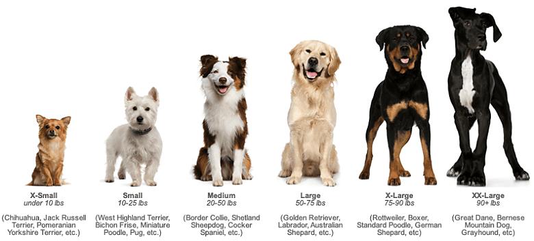 Dog Weights
