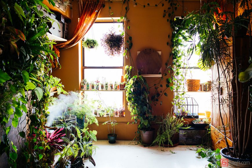 Turn your apartment into a gardens